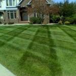 Jean's Lawn_full